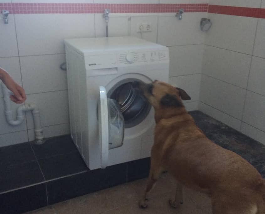 bettwanzenspürhund